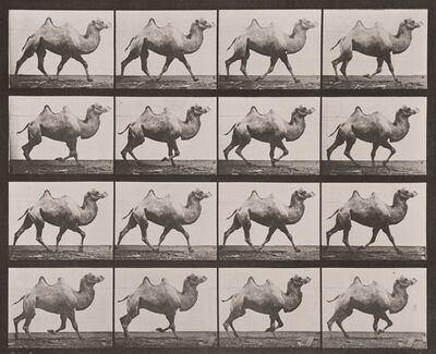 Eadweard Muybridge, 'Animal Locomotion, Plate 738 (Bactrian Camel)', 1887