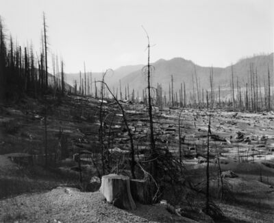 Frank Gohlke, 'Old clearcut in Clearwater Creek Valley, looking N; pumice deposits, young trees killed by heat- 9.5 miles NE of Mt. St. Helens, Wash.,', 1981