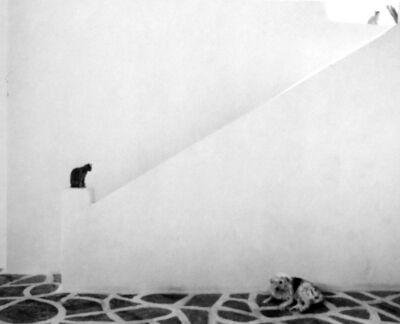 Pentti Sammallahti, 'Untitled, (Cat on the ledge)', 2010