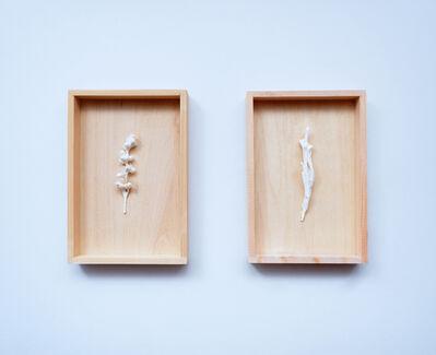 Kanami Takeda, 'White Specimens', 2017