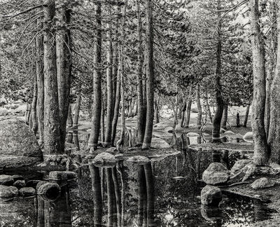 Gary Faye, 'Tenaya Trees', 1980