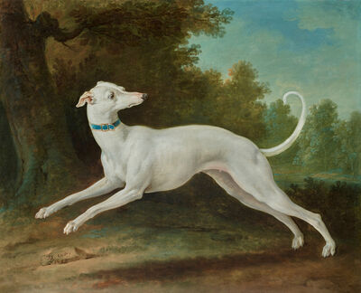 Jean-Baptiste Oudry, 'White Greyhound', 1748