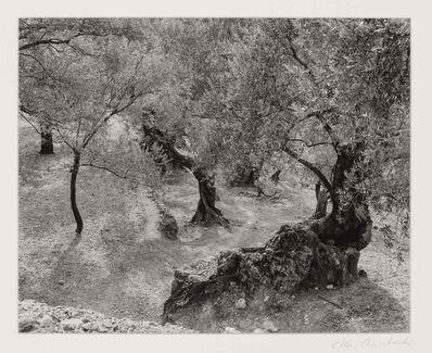 Ellen Auerbach, 'Olive Grove, Mallorca', 1959