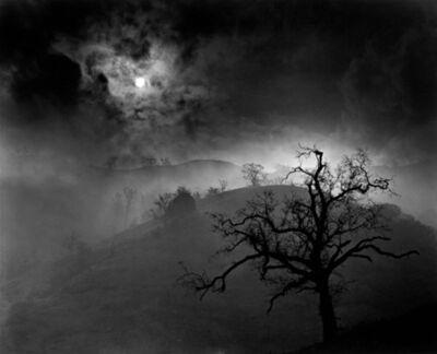 Wynn Bullock, 'Stark Tree', 1956