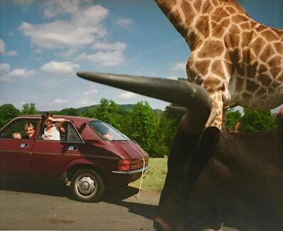 Martin Parr, 'Knowsley Safari Park', 2020