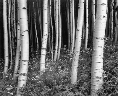 Chip Hooper, 'Aspens at Dusk (Targhee National Forest)', 1994