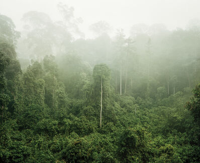 Olaf Otto Becker, 'Primary Forest 03, Malaysia, 10/2012', 2012