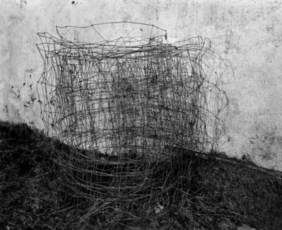 Amelia Stein, 'Sheep Wire', 2015
