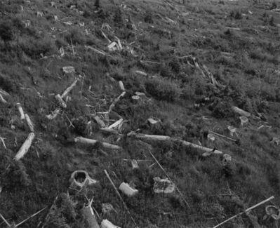 Frank Gohlke, 'Aerial View: herd of elk in old clearcut, 12 miles West of Mount St. Helens', 1981