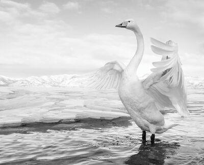David Yarrow, 'Swan Lake', ca. 2017