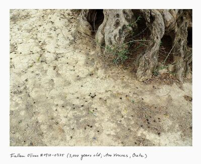 Rachel Sussman, 'Fallen olives #0910-4A04 (3,000 years old; Ano Vouves, Crete)', 2010