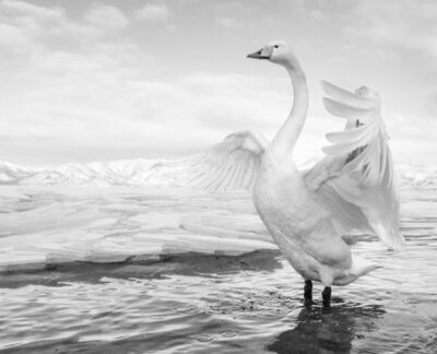 David Yarrow, 'Swan Lake', 2017