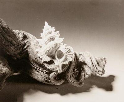 Ruth Bernhard, 'Shell', 1943