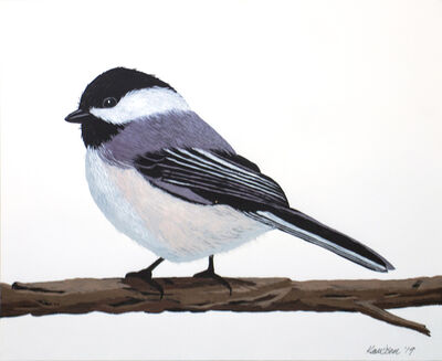 Mark Knudsen, 'Black Capped Chickadee', 2019