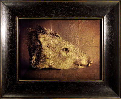 Kate Breakey, 'Javelina Head'
