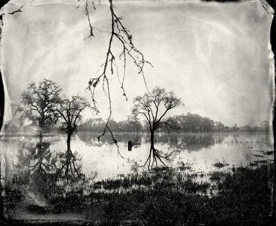 Ben Nixon, 'Flooded Oaks', 2010