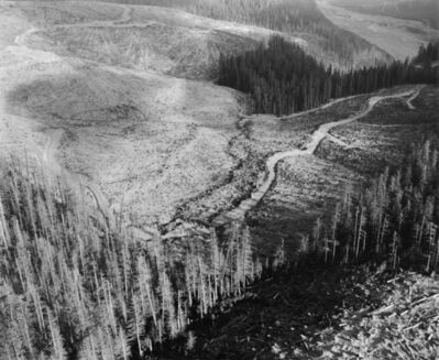 Frank Gohlke, 'Aerial view: standing dead and living trees, logging traces- edge of blast impact area approx. 14 miles W. of Mt. St. Helens, Wash.,', 1981