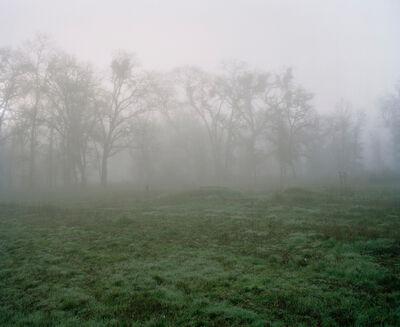 Maureen Drennan, 'Wall of Trees', 2009