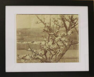 Eugène Atget, 'Rare original photograph of a blooming apple tree, by Eugène Atget', ca. 1900
