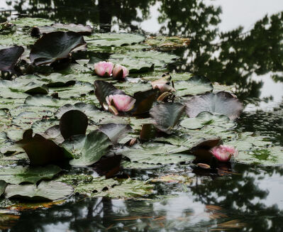 Michael Wesely, 'Giverny (18.07 - 19.49 Uhr, 26.6.2014)', 2014