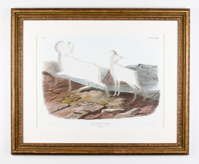 Brandon Ballengée, 'RIP Audubon's Bighorn Sheep: After John James Audubon, 1845/2016', 2016