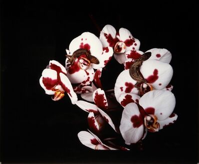 "Nobuyoshi Araki, 'Untitled, from the series ""Flowers and Jamorinsky""', 2005-2006"