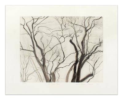 Sylvia Plimack Mangold, 'The Locust Trees, State II', 1988