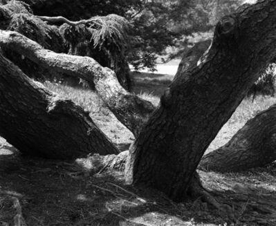 William Harting, 'Monkey Tree', 1968