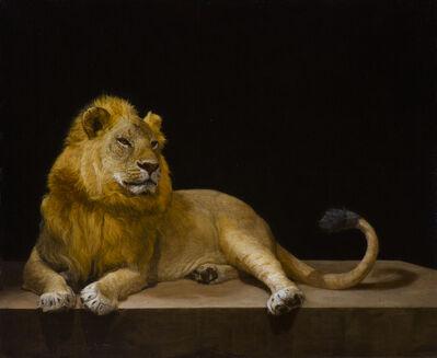 Patricia Traub, 'Adolescent Serengeti Lion', 2015