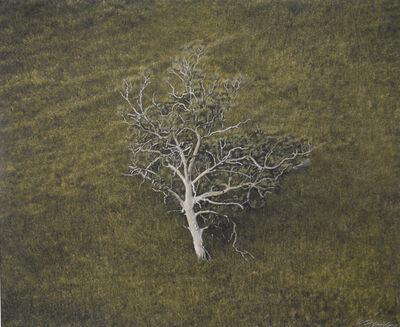 Kate Breakey, 'Eucalyptus Tree, Hillside, South Australia'
