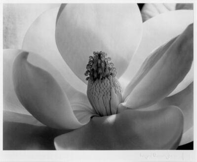 Imogen Cunningham, 'Magnolia Blossom ', 1925