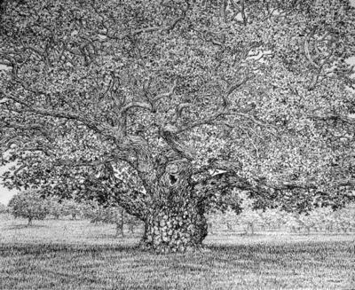 Roy Wright, 'Beneath the shadows of the Ancient Oak', 2019