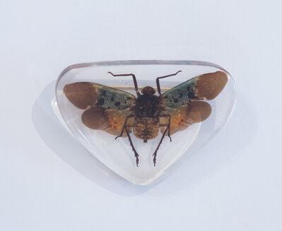 Yuko Katayama, 'Insect No.3', 2018