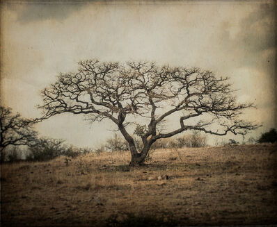 Kate Breakey, 'Bare Tree, Mexico'