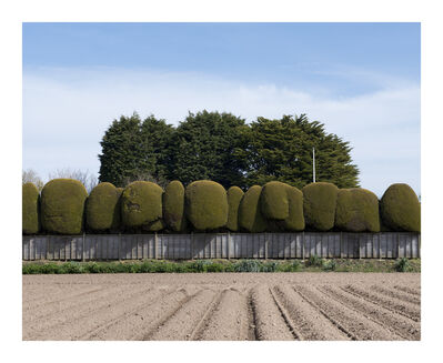 Michelle Sank, 'Field, Trinity, Jersey', ca. 2013