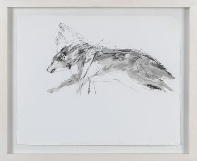 Marcela Rodríguez, 'lobo', 2019