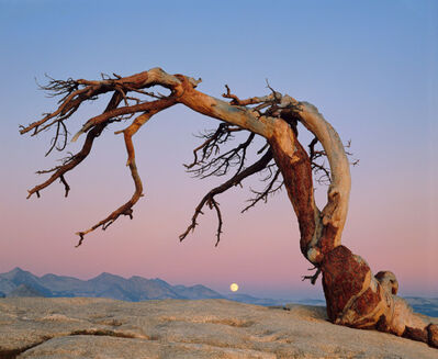 William Neill, 'Jeffrey Pine and the Moon, Yosemite Nat'l Park', 1985