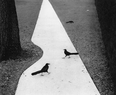 Pentti Sammallahti, 'Houston, Texas (Two Birds on Path)', 1998