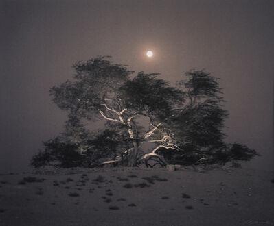 Kate Breakey, ''Tree of Life' Mesquite, Full Moon Rising, Bahrain'