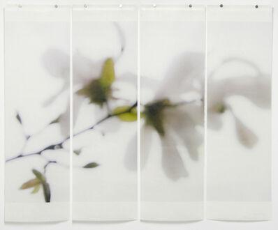 Jeri Eisenberg, 'Star Magnolia No. 3', 2012