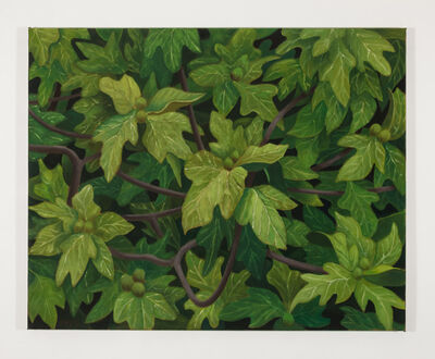 Stephen Mckenna, 'Fig Tree', 2012