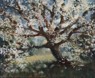Bill Jacklin, 'Cherry Tree, Central Park', 2014