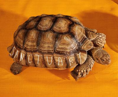 Roe Ethridge, 'Turtle', 2018
