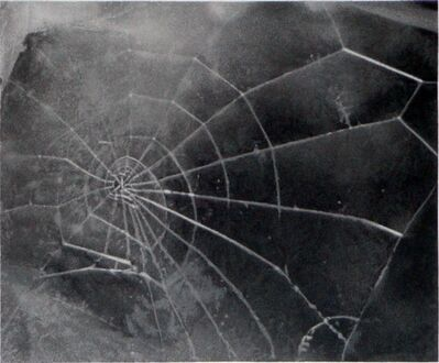 Vija Celmins, 'Spider-Web', 2009