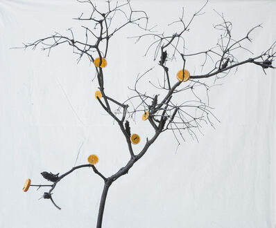 Itamar Freed, 'Orange Tree', 2019