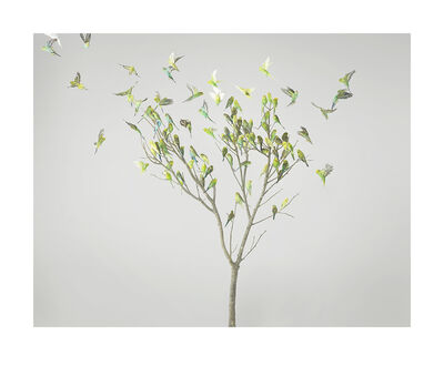 Leila Jeffreys, 'Gum Leaves', 2019