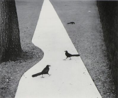 Pentti Sammallahti, 'Houston, Texas (2 Birds on Sidewalk)', 1998