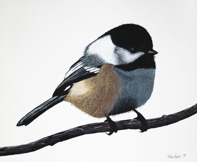 Mark Knudsen, 'Mountain Chickadee', 2019