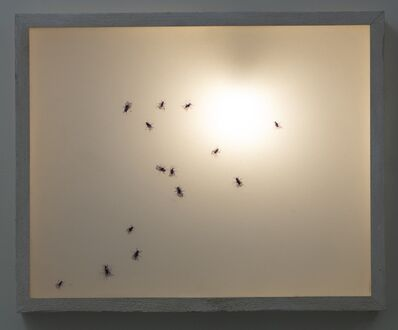 Paulius Sliaupa, 'The Life of the Insects', 2020