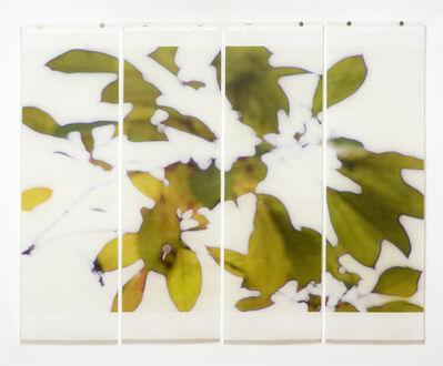 Jeri Eisenberg, 'Canopy (Bok Gardens)', 2017